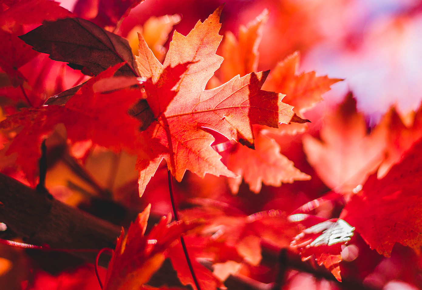 Autumn activities and events in Whistler, BC