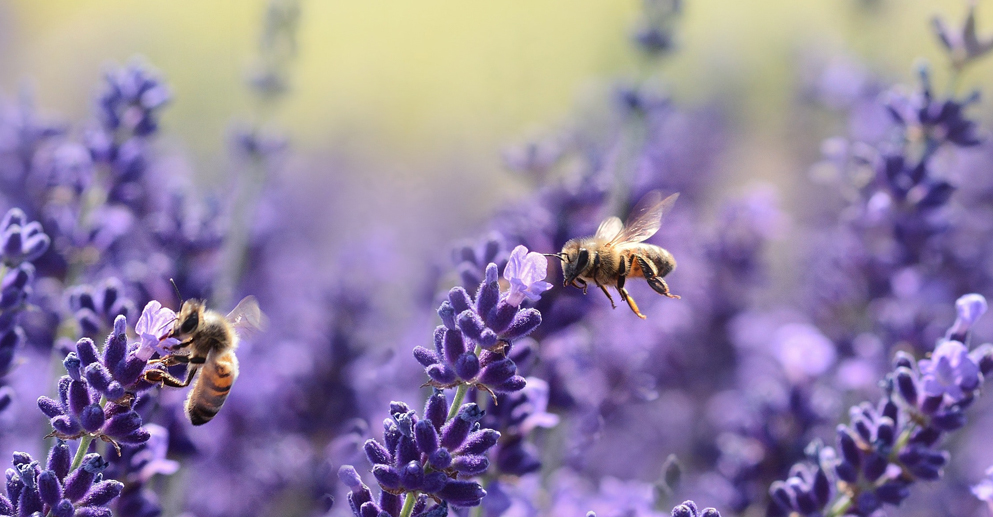 Pollinator Month   Fairmont Chateau Whistler, Sweet Treats, Savings and Social Responsibility
