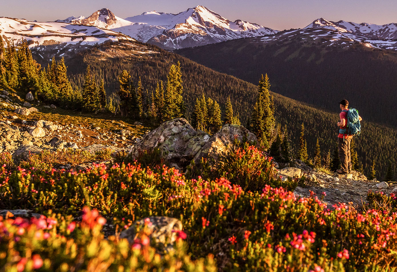 Hiking in Whistler | Image: Tourism Whistler, Mitch Winton