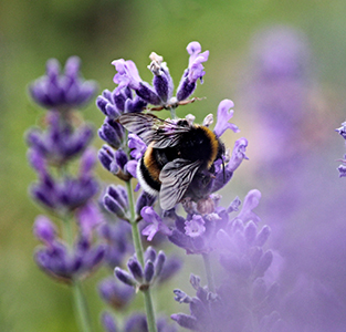Bee program at Fairmont Chateau Whistler