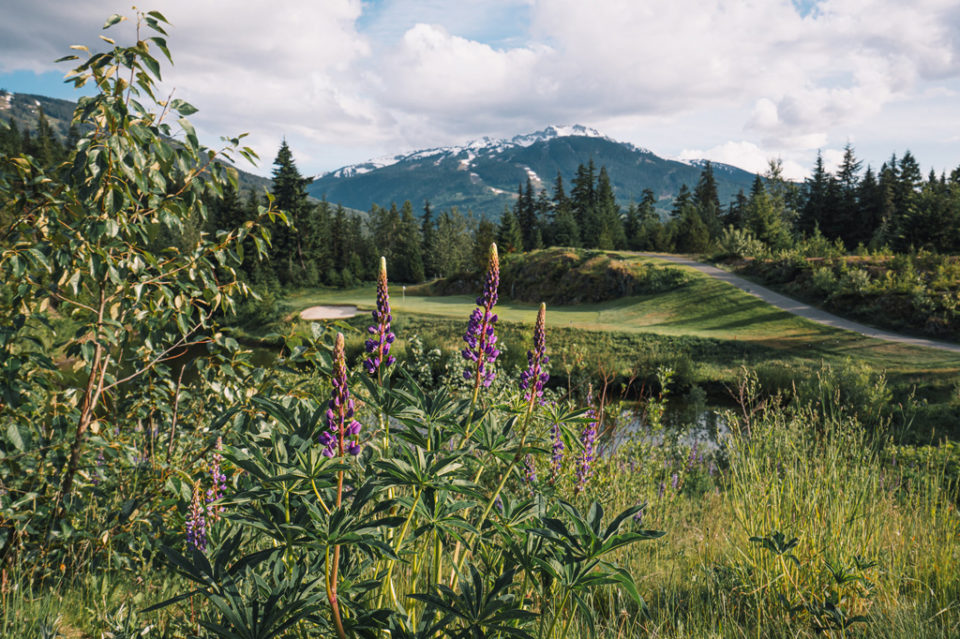 GOLF PRO OF THE YEAR AWARDED TO FAIRMONT CHATEAU WHISTLER ASSISTANT GOLF DIRECTOR